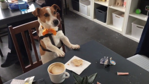 Cork's first doggie cafe opens its doors