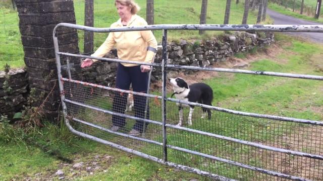 Mary O'Sullivan Sheep Farmer